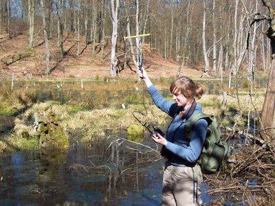 Projektmitarbeiterin Nicole Hermes bei der telemetrischen Suche von Waschbaeren im Mueritz-Nationalpark