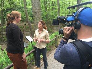 Filmaufnahmen am Waschbärengehege im Zoo Eberswalde