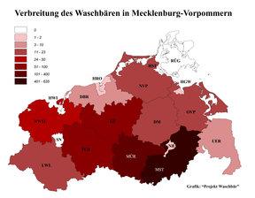 Verbreitung des Waschbären in Mecklenburg-Vorpommern