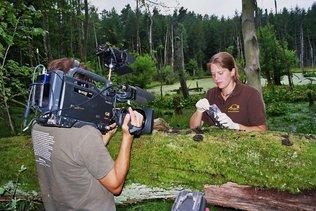 Filmaufnahmen beim Absammeln einer Waschbärlatrine im Müritz-Nationalpark
