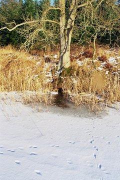 Standort Wildkamera Atemloch Biber
