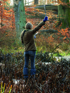 Waschbaer-Telemetrie im Mueritz-Nationalpark