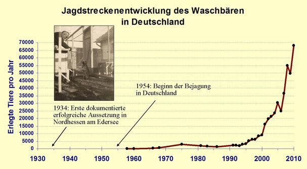 Jagdstreckenentwicklung Waschbaer Deutschland Stand 2012