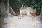 """Eichhoernchen-Fotofallenbild """"Projekt Waschbaer"""""""