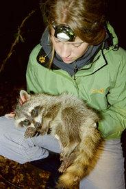Berit Koehnemann mit einem narkotisierten Jungtier