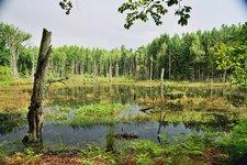 Charakteristisches Niedermoor im Untersuchungsgebiet des Müritz-Nationalparks