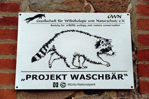 """Gesellschaft für Wildökologie und Naturschutz e.V. """"Projekt Waschbär"""""""