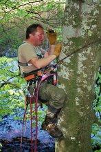 Erklettern eines Wurfbaumes zur Ermittlung der Wurfgroesse