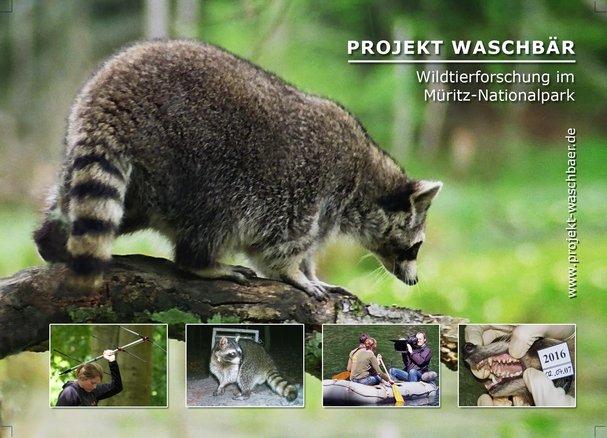 Projekt Waschbaer 1