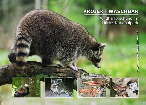 Projekt Waschbaer 2