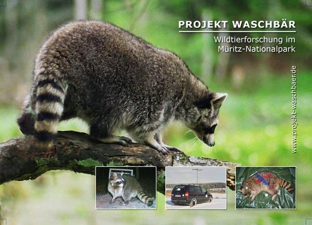 Projekt Waschbaer 3