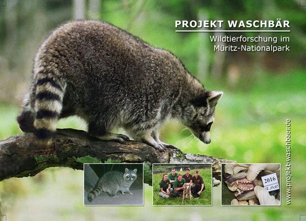 Projekt Waschbaer 4