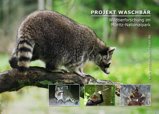 Projekt Waschbaer 5