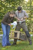 Gewichtsmessung eines gefangenen Waschbären im Bearbeitungskäfig